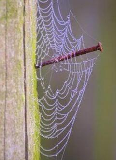 spider web nail
