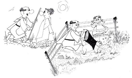 Pigs among monks