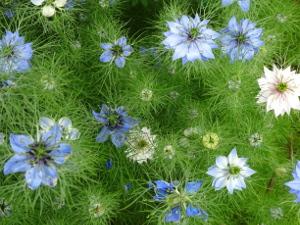 Farm Flowers 1