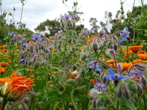 Farm Flowers 2