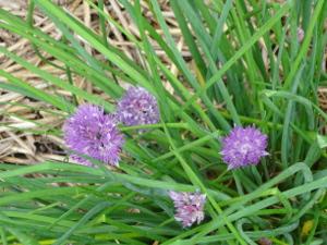Farm Flowers 5