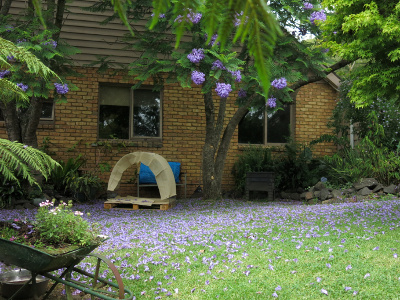The crib under the Jacaranda